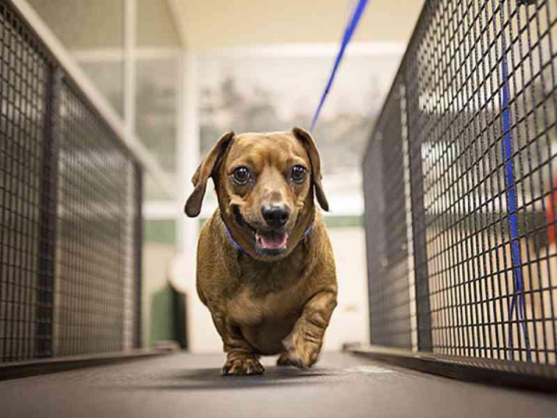 Mais de 400 animais foram adotados no Canil Municipal de Juiz de Fora (MG) em 2019