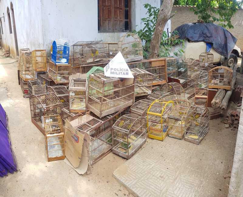 Polícia Militar de Meio Ambiente apreende 36 galos vítimas de maus-tratos e 179 pássaros da fauna silvestre em Aimorés, MG