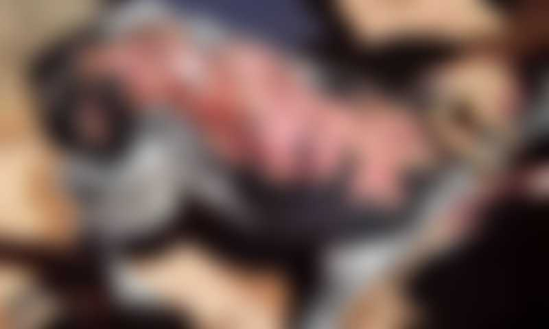 Vítima de maus-tratos, cachorro sofre graves queimaduras em MS