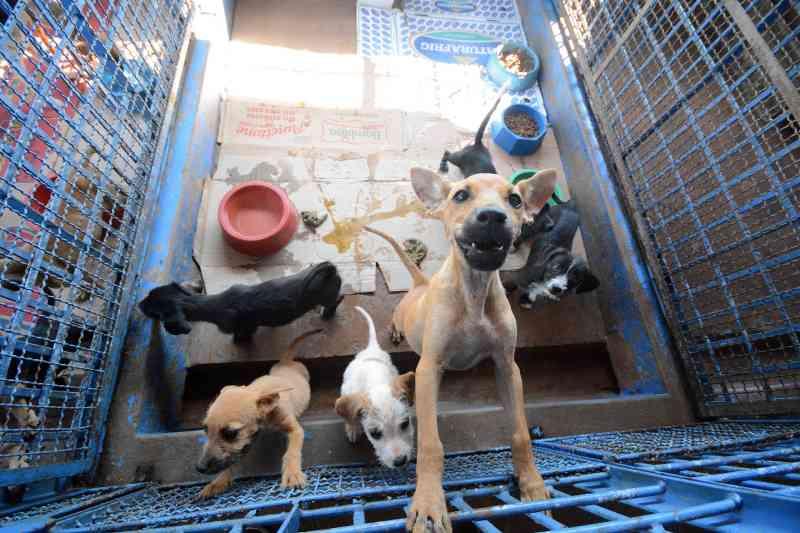 Prefeitura de Campo Grande (MS) vai criar subsecretaria para gerenciar UPA para cães e gatos