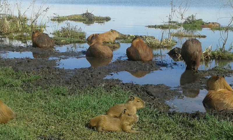 Devido a reprodução, casos de atropelamento de animais podem subir até 60% no verão