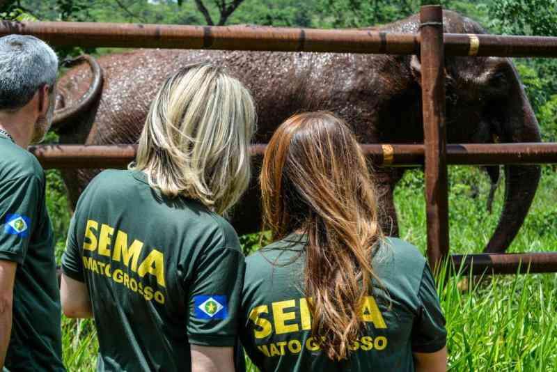 Santuário de Elefantes tem impacto positivo na fauna e flora locais