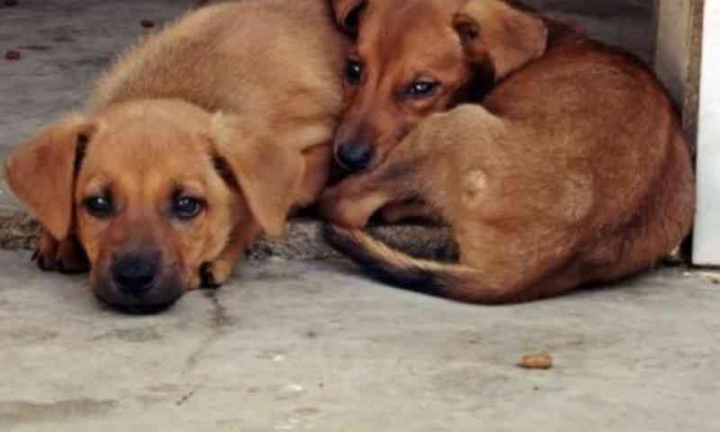 Projeto cria campanha 'Dezembro Verde' contra o abandono e maus-tratos de animais, em Cuiabá