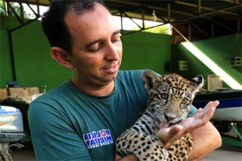 Animais adultos constantemente são atropelados ou abatidos e os filhotes ficam desprotegidos — Foto: Batalhão Ambiental - PMMT