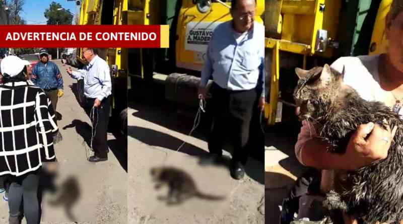 Homem asfixia e arrasta gato para jogá-lo em um caminhão de lixo no México