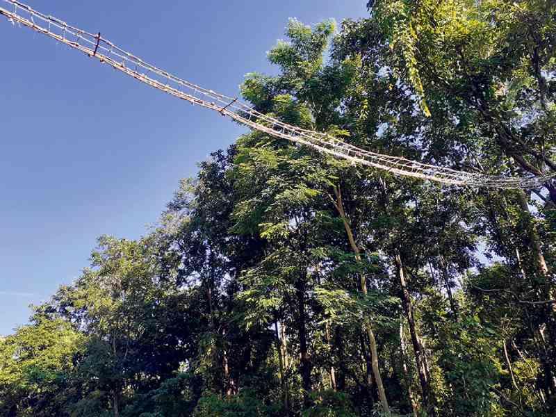 Parque nacional no Nepal constrói ponte de dossel para reduzir acidentes com animais selvagens na estrada