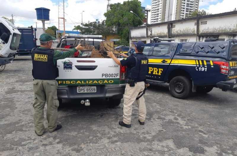 PRF e IBAMA realizam operação conjunta em Campina Grande