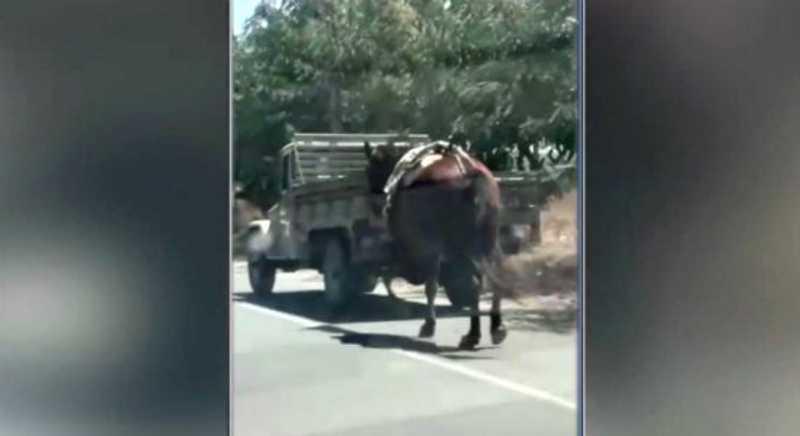 Motorista amarra cavalo a carro e o arrasta por cidades do Agreste de Pernambuco