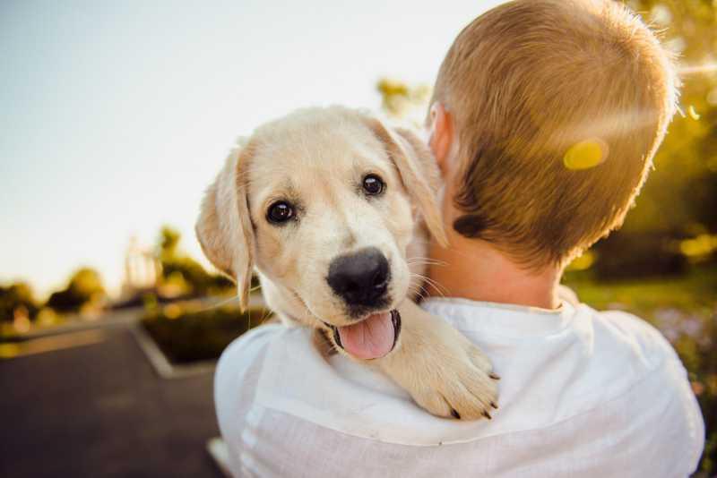 Portugal: projeto quer proibir restrições aos animais na locação de imóveis