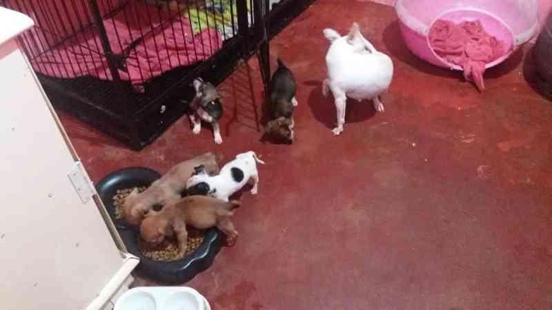 Moradora que cuida de 42 cães precisa de ajuda para reconstruir canil, destruído em queda de árvore em Cascavel, PR