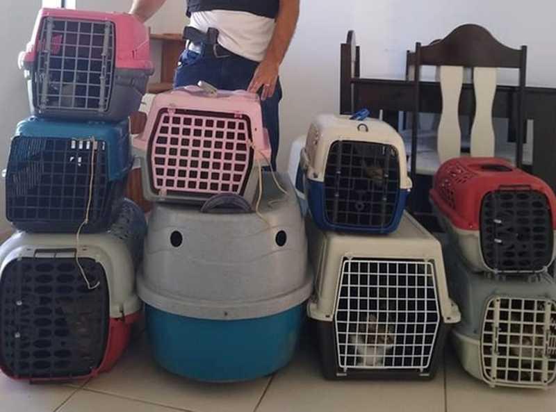 Mais de 20 gatos são resgatados após denúncia de maus-tratos, em Guarapuava, PR