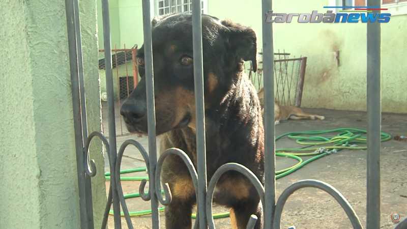 Moradores denunciam vizinhos que abandonaram cães sem comida em Londrina, PR