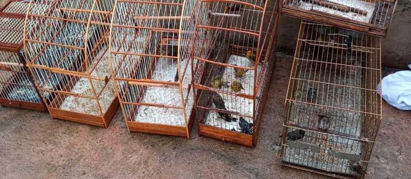 Mulher é multada em R$ 29 mil por manter aves em cativeiro em Maringá, PR