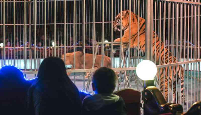 Portugal: Legislação não impede que animais selvagens sejam vendidos a circos estrangeiros