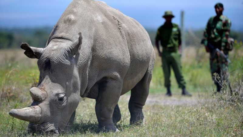 Dez rinocerontes-brancos assassinados por caçadores furtivos em reserva queniana