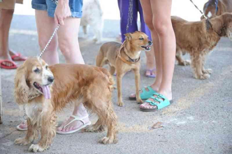 Castração de animais no Rio de Janeiro tem grande queda na gestão Crivella