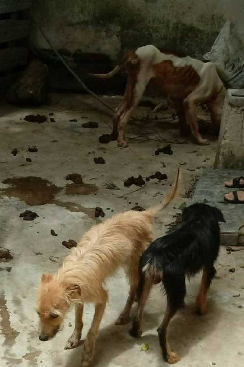Polícia investiga maus-tratos a cachorros abandonados em Niterói, RJ