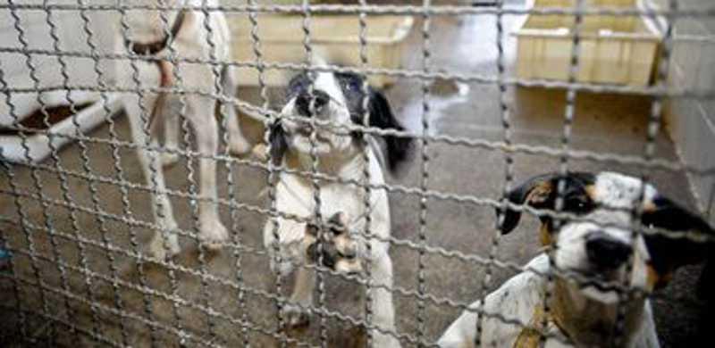 Crimes contra animais: em Petrópolis (RJ), mais de 900 denúncias foram registradas pela Cobea