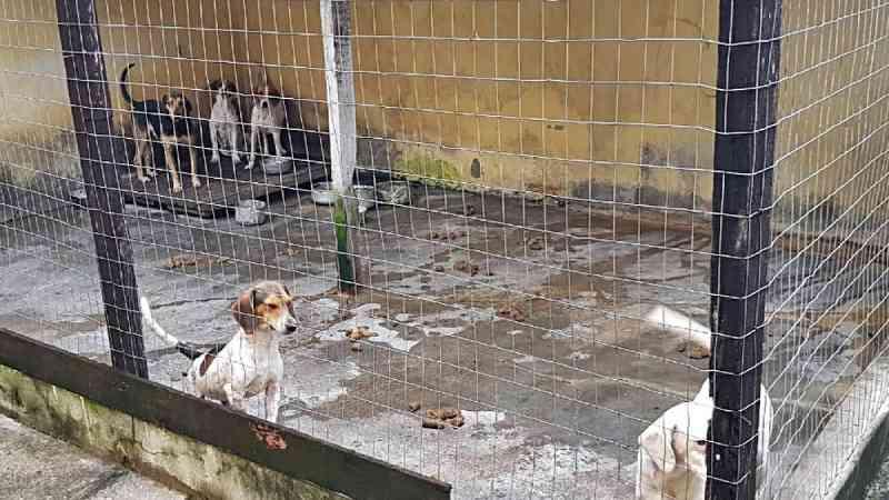 PF, MPF e ICMBio fazem operação contra caça de animais silvestres no RJ
