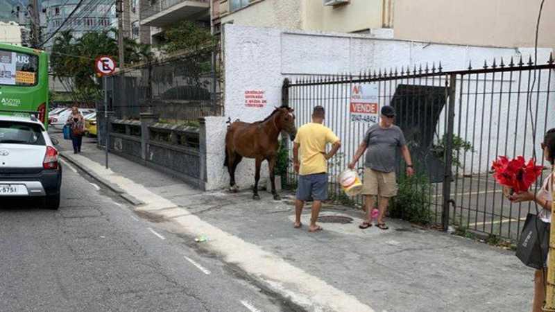 Moradores ligaram para o 1746 e foram informados de que a prefeitura não poderia retirar o animal do local Foto: Rosana Abreu
