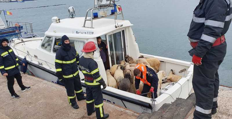 Animais retirados do Queen Hind, navio de carga que tombou no Mar Negro — Foto: IGSU Romania / AFP