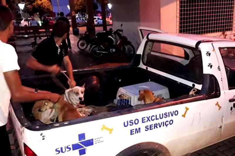 Canil Municipal inicia ação de captura de animais durante as madrugadas em Ouro Preto do Oeste, RO