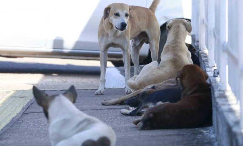 Governador sanciona Lei que obriga estabelecimentos a comunicar maus-tratos aos animais em Rondônia