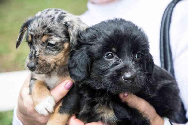 Castrações de cães e gatos chegam a 1,2 mil em 2019 em Santa Cruz do Sul, RS