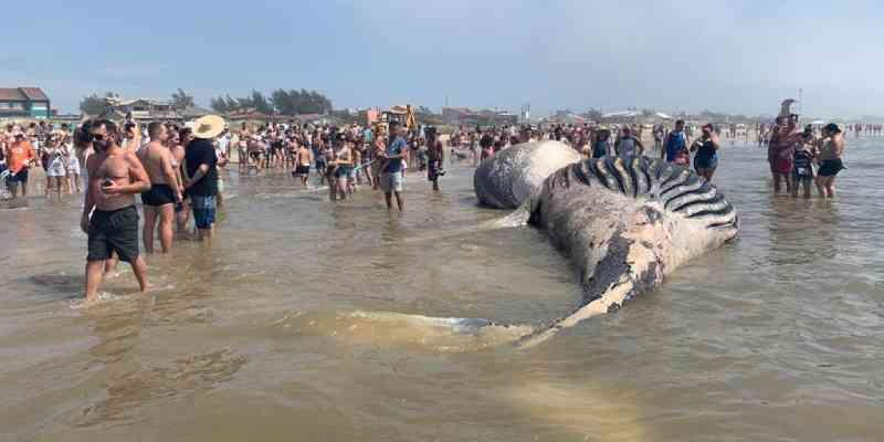 Baleia é encontrada morta na praia de Óasis, em Tramandai, RS