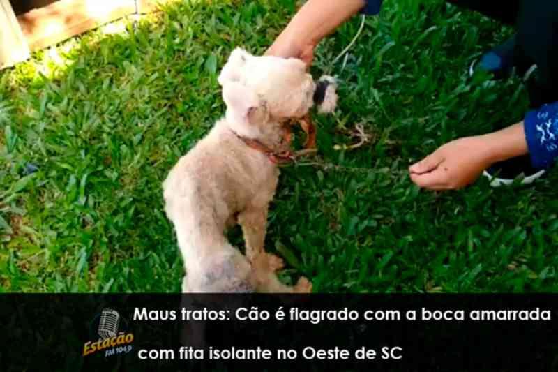 Maus-tratos: cão é flagrado com a boca amarrada com fita isolante no Oeste de SC
