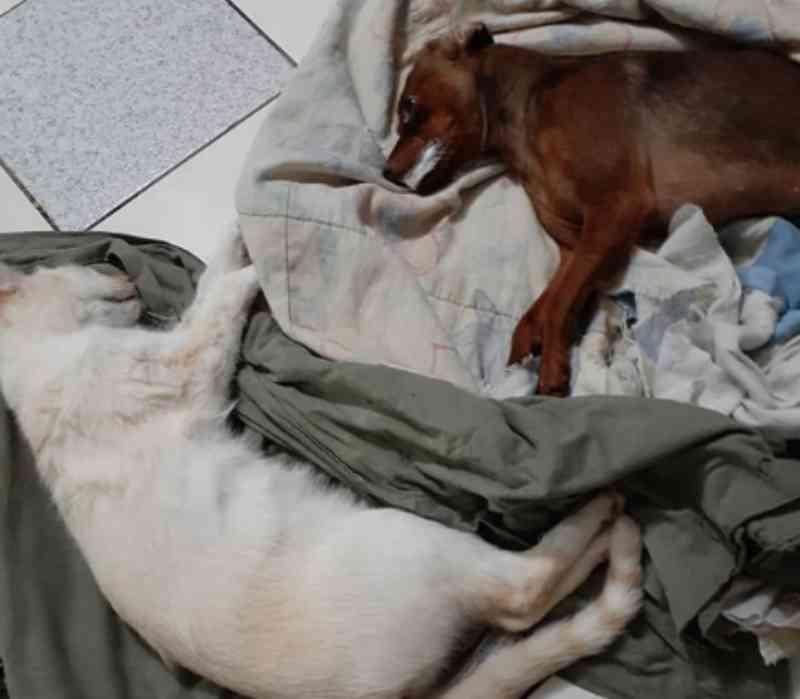 Cão e gatos são mortos por envenenamento no Bairro Bortolon, em Xanxerê, SC