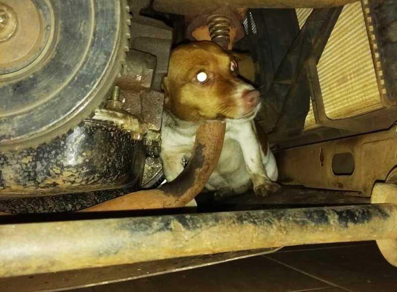 VÍDEO: com medo de fogos, cão fica preso em motor de carro em Chapecó, SC