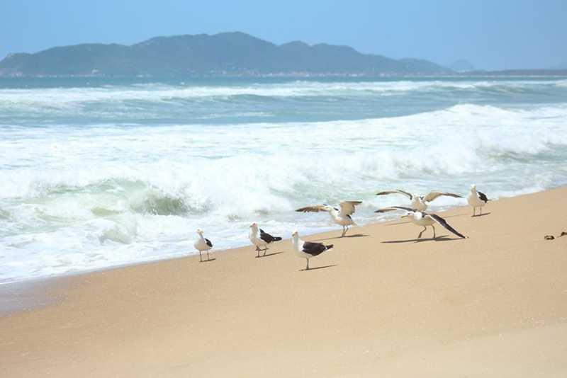 Praia do Moçambique, em Florianópolis, na última terça-feira. — Foto: Nilson Coelho/R3 Animal