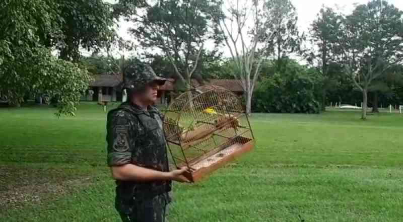 Polícia apreende 10 aves em cativeiro em casas de Charqueada (SP); multas somam R$ 3,2 mil