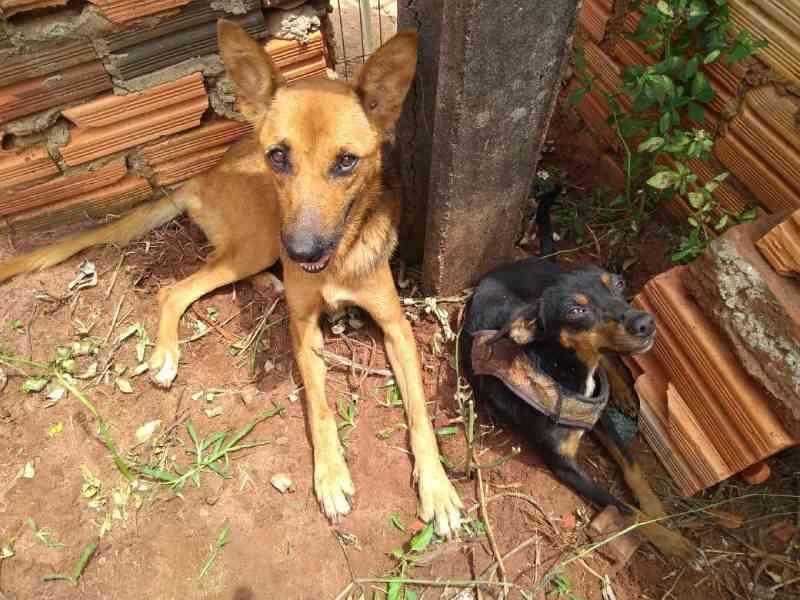 Cães abandonados e desnutridos são resgatados por policiais civis de Itaí, SP
