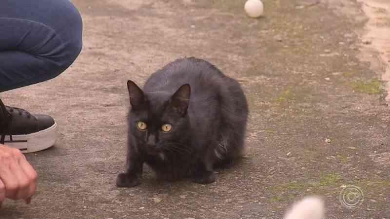Morte de mais de 30 gatos assusta moradores em bairro de Jundiaí, SP: 'Tentamos salvar'