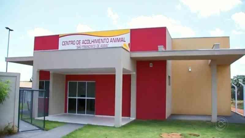 Centro de acolhimento oferece tratamento para animais vítimas de abandono e maus-tratos em Olímpia, SP