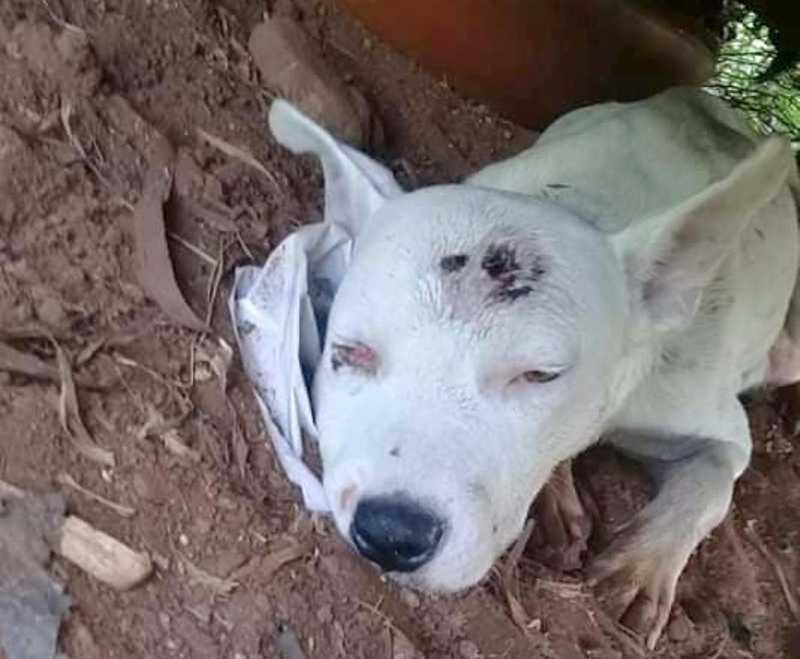 Em Bady Bassitt (SP) homem mata dez filhotes de cachorro com golpes de martelo; mãe sobreviveu