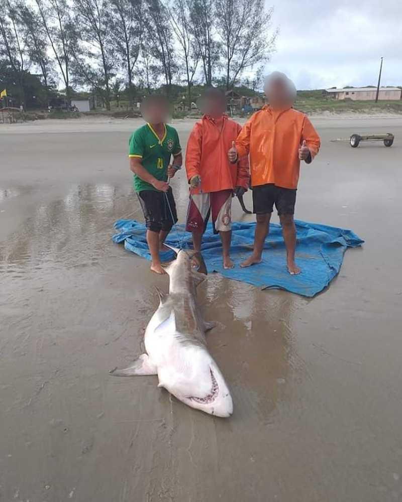 Trio exibiu tubarão ameaçado de extinção e acabou sendo multado em Ilha Comprida — Foto: Divulgação/Polícia Ambiental