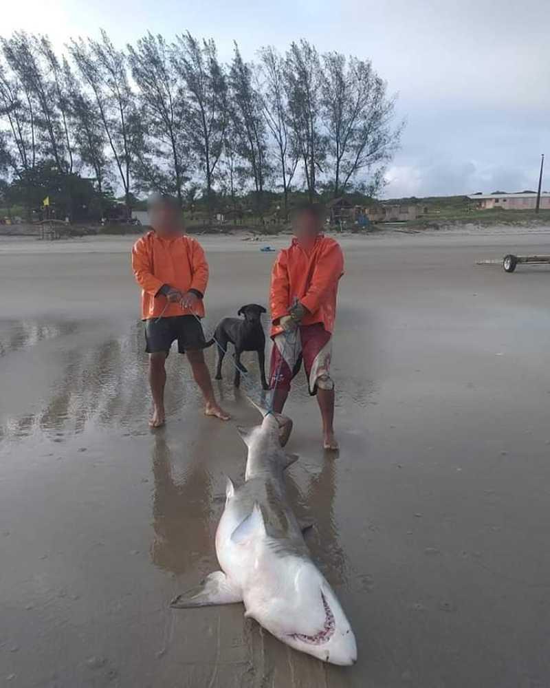 Pescadores exibiram o tubarão morto nas redes sociais — Foto: Divulgação/Polícia Ambiental