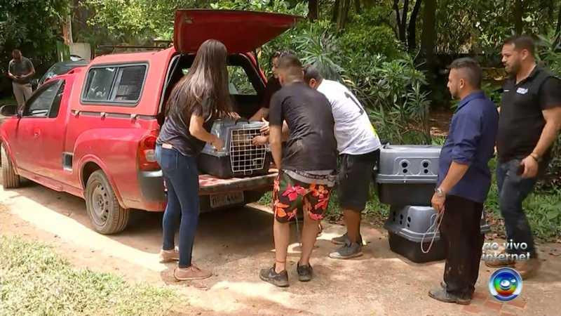 Cães foram resgatados de chácara em Itu — Foto: Reprodução/TV TEM