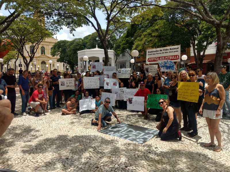 ONGs e voluntários fazem protesto contra maus-tratos após resgate de 33 pit bulls em chácara de Itu, SP