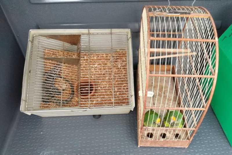 Animais silvestres foram apreendidos em Presidente Venceslau — Foto: Polícia Militar Ambiental/Divulgação