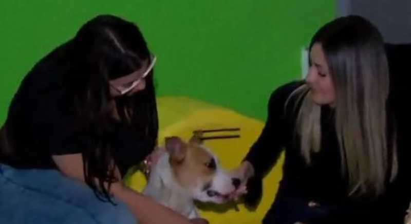 Miriam Frossi e Viviane Melo junto com o cão Thor após o resgate. Reprodução/Record TV