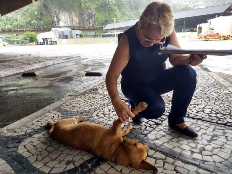 Plataformista pensa em adotar cadela na rodoviária. — Foto: G1 Santos