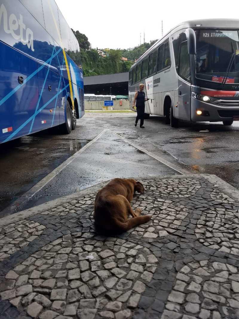 Cadela espera reencontrar tutores na rodoviária. — Foto: G1 Santos