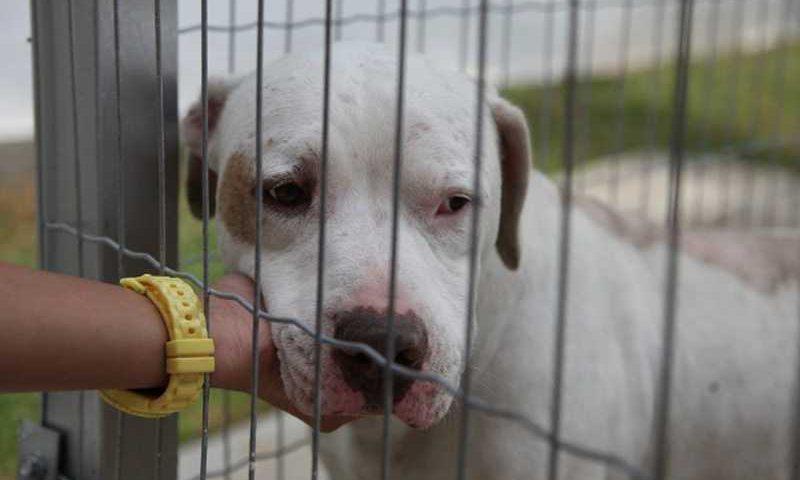 Santos conta com a Coordenadoria de Defesa da Vida Animal (Codevida), onde animais resgatados aguardam por adoção — Foto: Divulgação / Prefeitura Municipal de Santos
