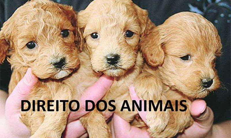 Prevenir os maus-tratos e respeitar os direitos dos animais pode vir a ser tarefa escolar. Crédito: Pixabay
