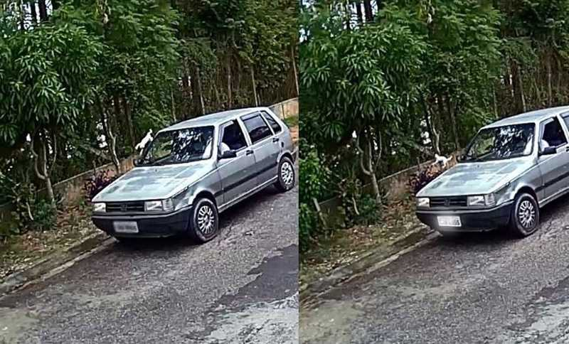 Câmera de segurança registra motorista atirando gatos pela janela de carro; vídeo