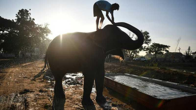 Homem dá banho em um elefante antes da chegada dos turistas - AFP